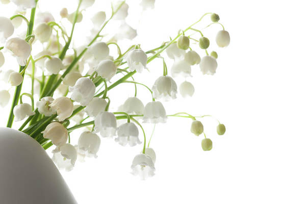 Vase Of Flowers Photograph - Lily Of The Valley In A Vase, Highkey by Ingmar Wesemann
