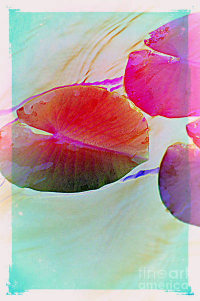 Photograph - Lily Pad 1 by Susanne Van Hulst