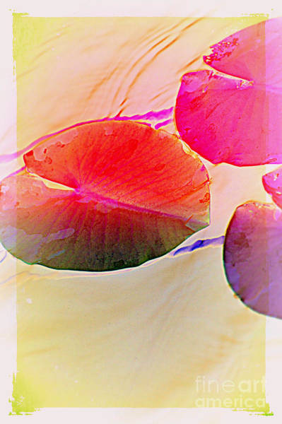 Photograph - Lily Pad 2 by Susanne Van Hulst
