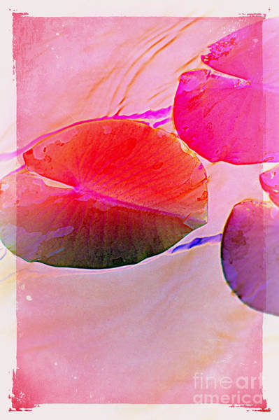 Photograph - Lily Pad 3 by Susanne Van Hulst