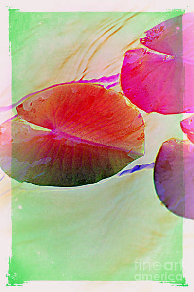 Photograph - Lily Pad 4 by Susanne Van Hulst