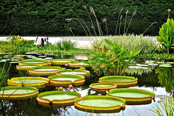 Lilly Pad Wall Art - Photograph - Lily Pad Garden by Frozen in Time Fine Art Photography