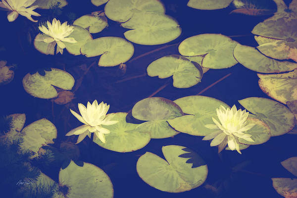 Lilly Pad Digital Art - Lily Pads by Ann Powell