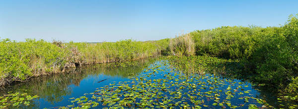 Anhinga Photograph - Lily Pads In The Lake, Anhinga Trail by Panoramic Images