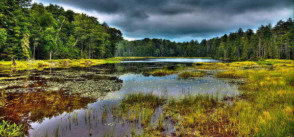 Photograph - Lily Pads On Fly Pond by David Patterson