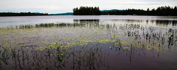 Photograph - Lily Pads On Raquette Lake by David Patterson