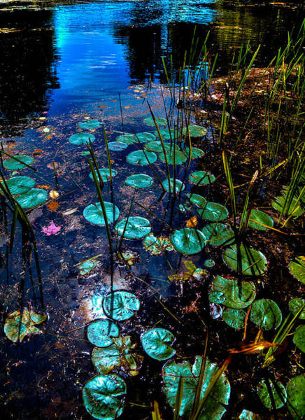 Photograph - Lily Pads On Beaver Brook by David Patterson