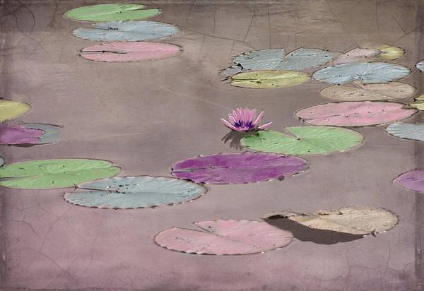 Pod Mixed Media - Lily Pods In Pastel by Rosalie Scanlon