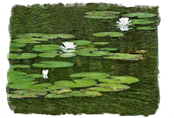 Photograph - Lily Pond by Gene Norris