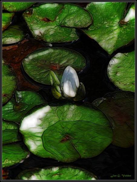 Painting - Lily Pond by Jon Volden