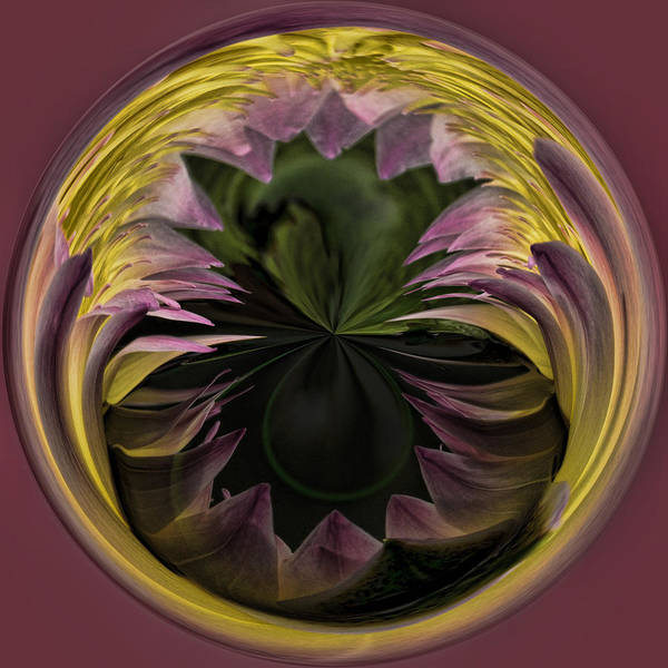 Photograph - Lily Portal by Wes and Dotty Weber