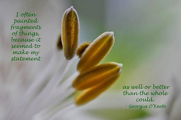 Photograph - Lily With O'keefe Quote by Phyllis Meinke