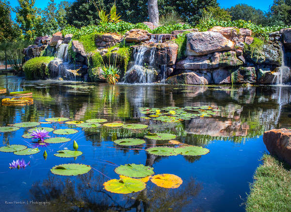 Photograph - Lilypond At The Dallas Arboretum by Ross Henton