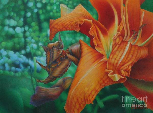 Painting - Lily's Evening by Pamela Clements