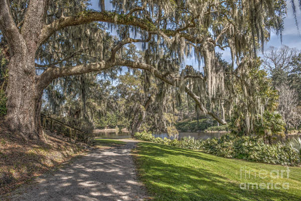 Photograph - Limbs Dripping With Spanish Moss by Dale Powell