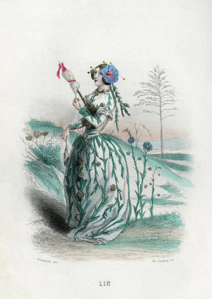 Wall Art - Drawing - Lin Flax (linum)        Date 1847 by Mary Evans Picture Library
