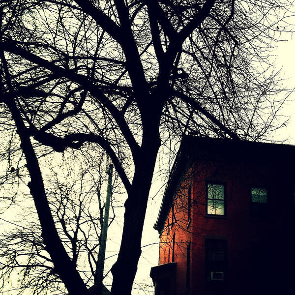 Photograph - Lincoln Place Brownstone And Tree by Natasha Marco