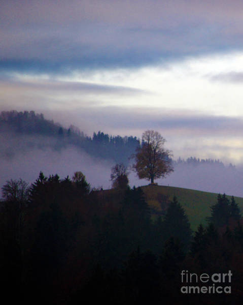 Photograph - Linden Berry Tree And Fog 2 by Susanne Van Hulst