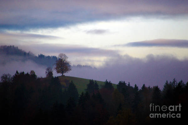 Photograph - Linden Berry Tree And Fog by Susanne Van Hulst
