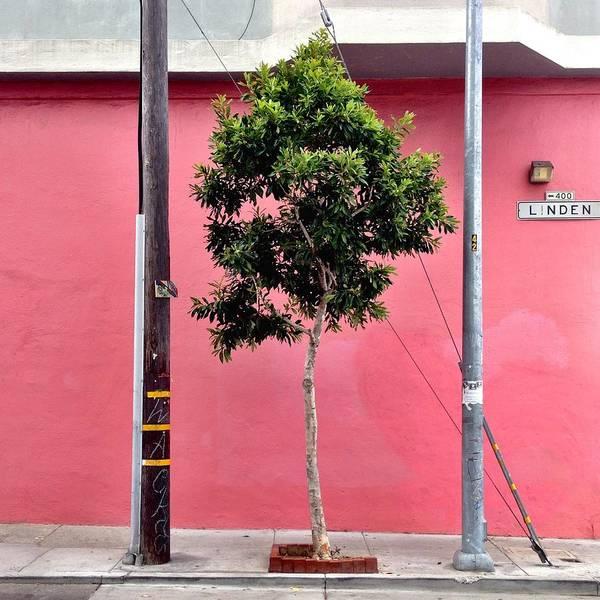 Pink Wall Art - Photograph - Linden Street by Julie Gebhardt