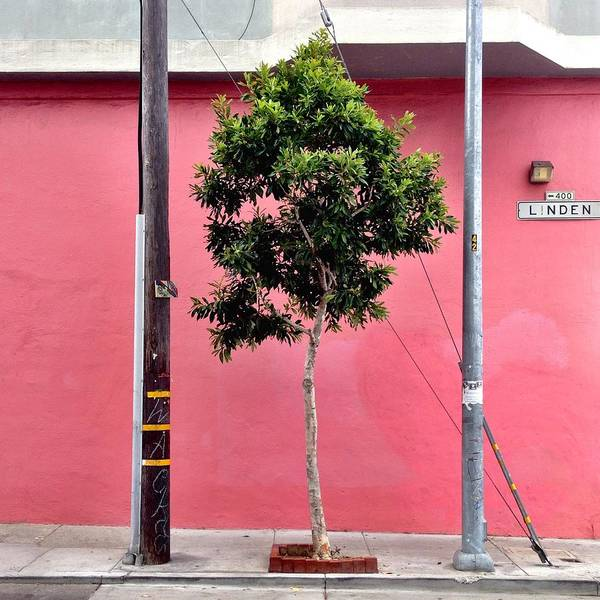 Tree Wall Art - Photograph - Linden Street by Julie Gebhardt