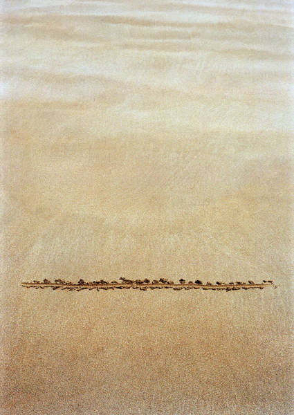 Wall Art - Photograph - Line Drawn In Sand by David Parker/science Photo Library