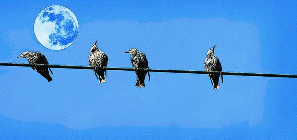Marsh Bird Digital Art - Lined Up Birds Pop Art by Celestial Images