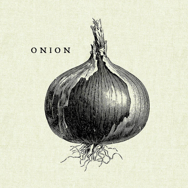 Red Onion Painting - Linen Vegetable Bw Sketch Onion by Studio Mousseau