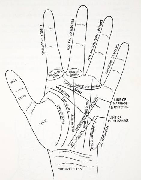 Palm Reading Wall Art - Drawing - Lines Of The Hand by English School