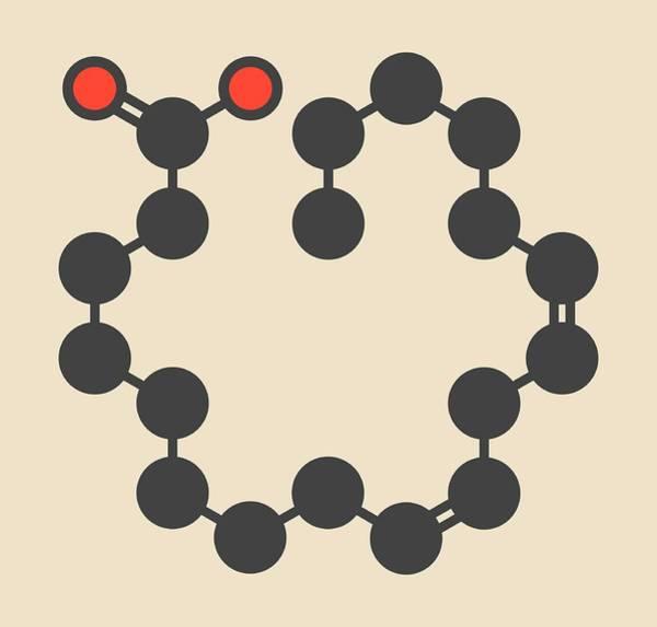 Omega Photograph - Linoleic Acid Molecule by Molekuul