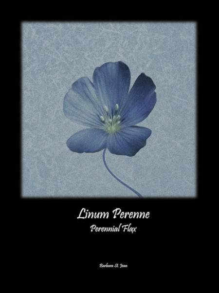 Digital Art - Linum Perenne Wildflower Bc Poster 2 by Barbara St Jean