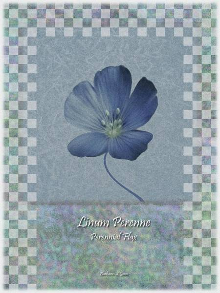 Digital Art - Linum Perenne Wildflower Bc Poster 3 by Barbara St Jean