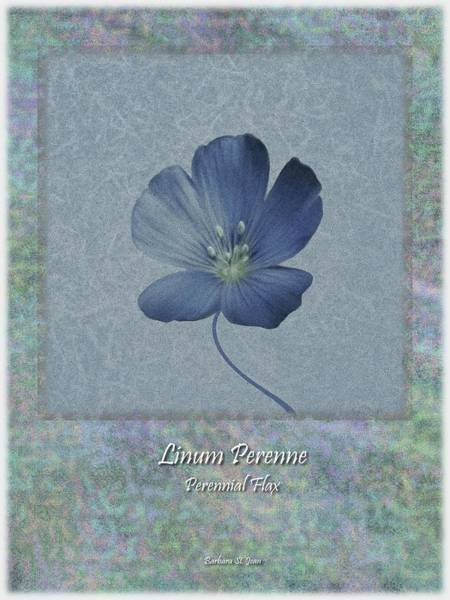 Digital Art - Linum Perenne Wildflower Bc Poster 4 by Barbara St Jean