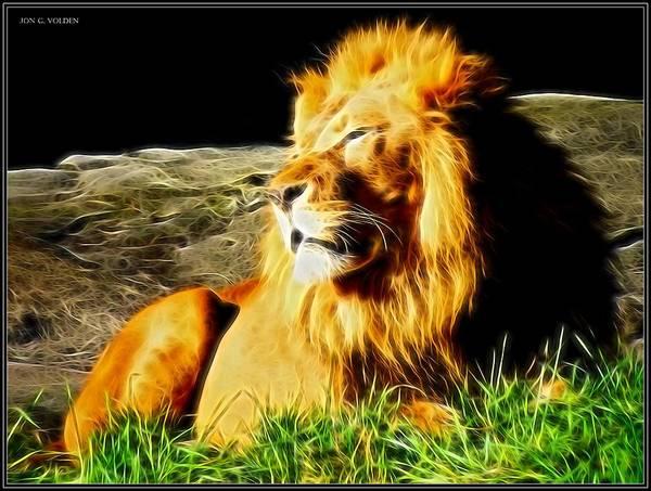 Photograph - Lion Around by Jon Volden