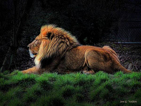 Painting - Lion At Rest by Jon Volden