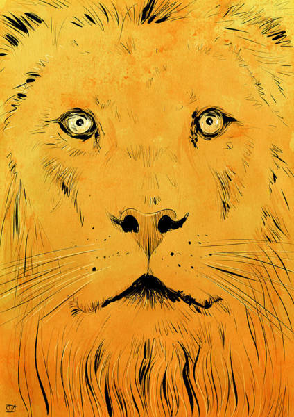 Lion Art Wall Art - Drawing - Lion by Giuseppe Cristiano