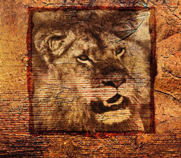 Photograph - Lion by Mauro Celotti