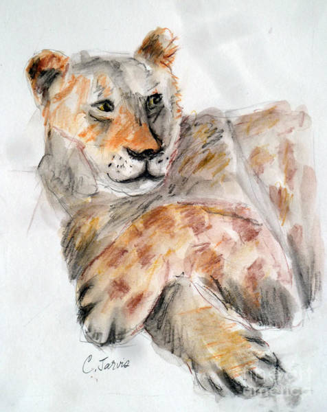 Painting - Lion Resting by Carolyn Jarvis