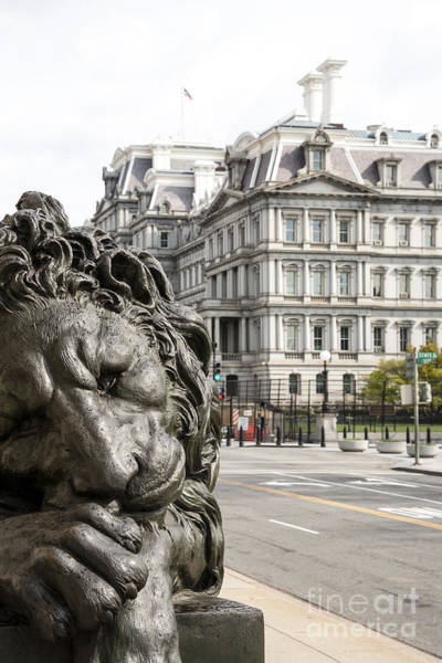 Photograph - Lion Statue At Entrance To Corcoran Gallery Of Art In Washington Dc by William Kuta