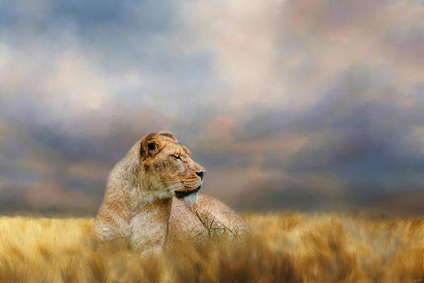 Photograph - Lioness After The Storm by Jai Johnson