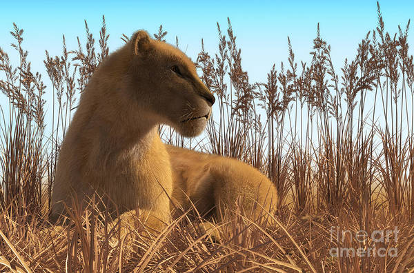 Digital Art - Lioness Laying In The Grass by Elle Arden Walby