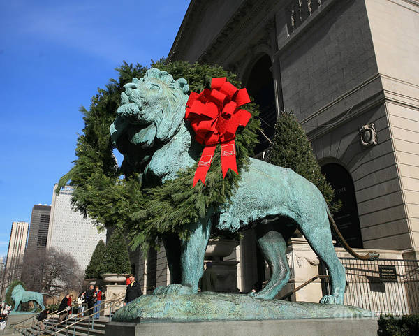 Wall Art - Photograph - Lions At Christmas by Timothy Johnson
