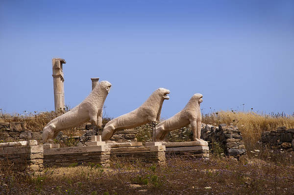 Photograph - Lions Of Delos by Brenda Kean