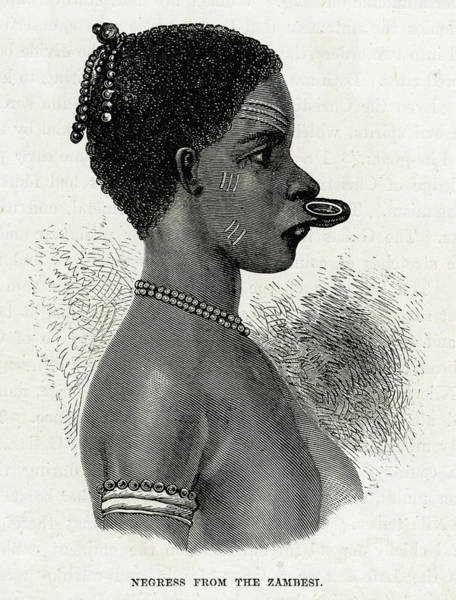 Lip Piercing Wall Art - Drawing - Lip-ring Of A Zambesi Negress by Mary Evans Picture Library