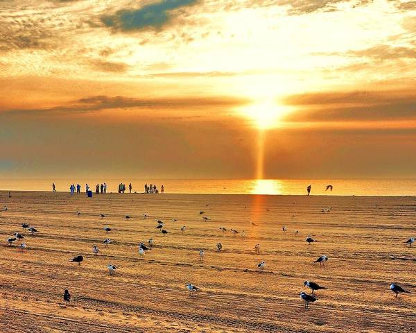 Photograph - Liquid Gold Sunrise by Kim Bemis