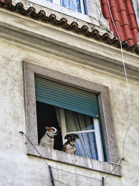 Photograph - Lisbon Castle Waldorf And Statler Dogs by Menega Sabidussi