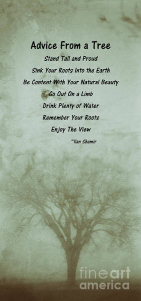 Photograph - Listen To The Tree by Pam  Holdsworth