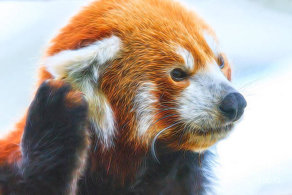 Digital Art - Listening Red Panda by Ray Shiu