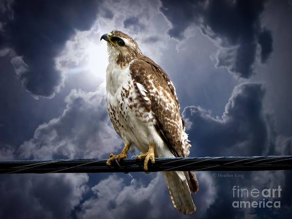 River Hawk Photograph - Listening To Gaia by Heather King