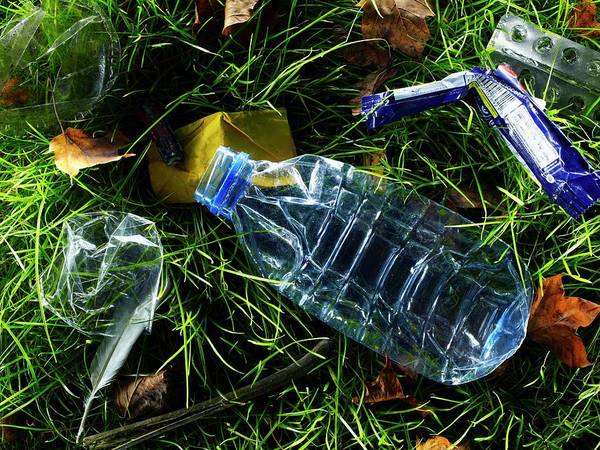 Litter Photograph - Litter by Patrick Llewelyn-davies/science Photo Library